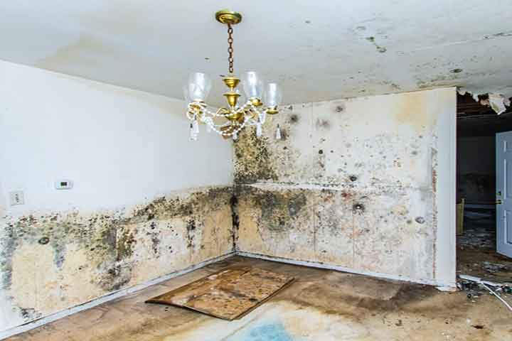 houston Mold-removal and Remediation-services-rewuired-in-a-house-damage-by-black-mold